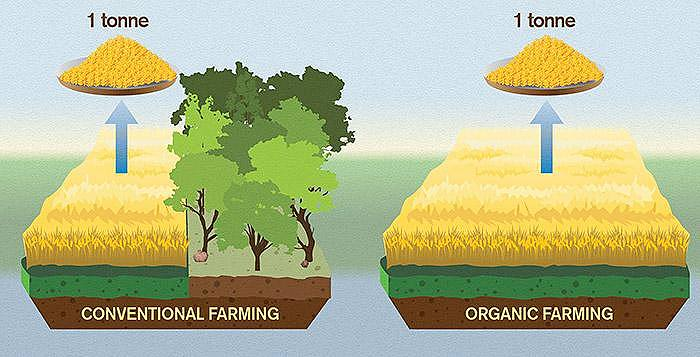 Organic food - اخبار زیست فن