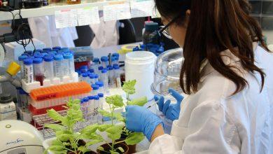 Photo of Plants as antifungal factories