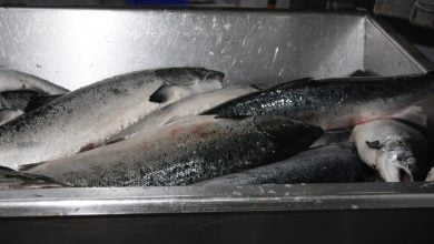 Photo of Compassion in World Farming calls for Scots salmon sector moratorium