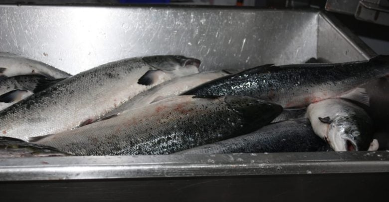 Scots salmon sector moratorium - اخبار زیست فن