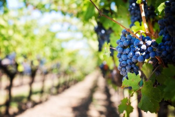 better wines from warmer climates - اخبار زیست فن