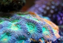 evolution of corals and their microbiomes - اخبار زیست فن