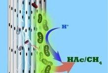 exuding useful chemicals - اخبار زیست فن
