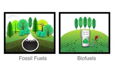 Photo of بررسی وضعیت اشتغالزایی در حوزهی انرژیهای تجدیدپذیر با تأکید بر سوختهای زیستی