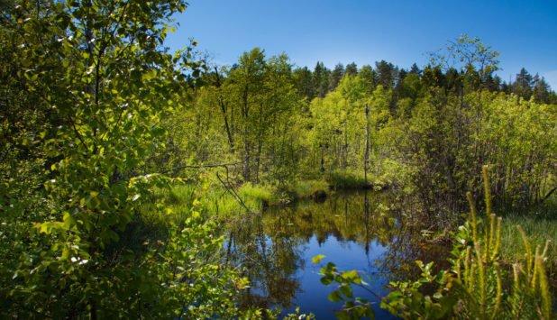 new biodiversity commitment - اخبار زیست فن