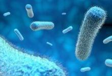 Photo of توانایی زندگی باکتریها در شرایط تنش بدون دیوارهی سلولی