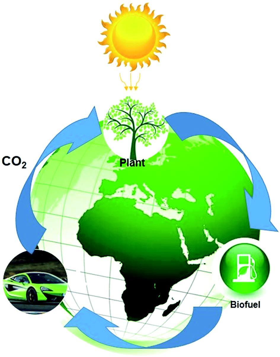 چرخه کربن خنثی برای سوختهای زیستی