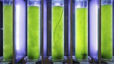 Photo of الکترولیز سلولهای میکروجلبک با هدف استخراج محتوی لیپید