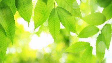 تولید سوخت از گیاهان