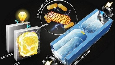 Photo of روش شناسایی باکتریهای مولد برق