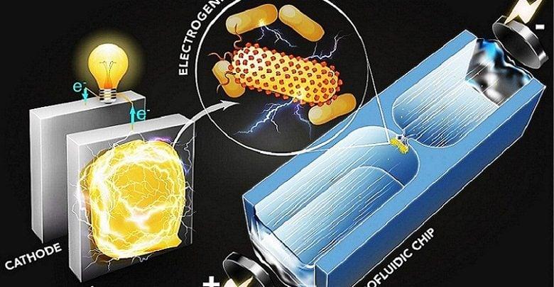 باکتریهای مولد برق