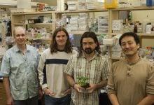 Photo of Blueprint for plant immune response found