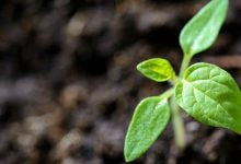 Photo of Herbal antioxidants are becoming increasingly important