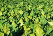 More Productive Crops - اخبار زیست فن