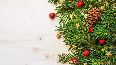 Photo of Pine needles from Christmas trees could be turned into paint and food sweeteners