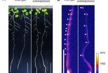 Plant peptide - اخبار زیست فن