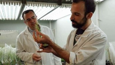 Photo of Researchers identify gene essential for plants to survive