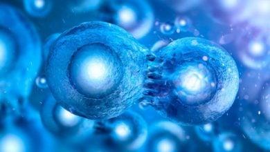 Photo of فناوری مبتنی بر مخمر برای مبارزه با سرطان
