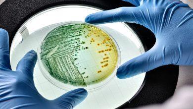 کاربرد میکروارگانیسمهای جدید
