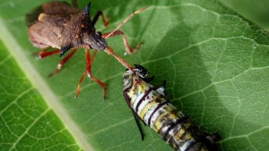 مزایای استرس آفات برای گیاهان