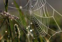 تجاریسازی فناوری تولید ابریشم عنکبوت