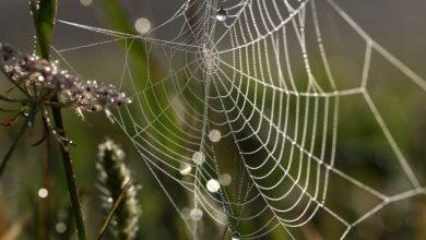 Photo of تجاریسازی فناوری تولید ابریشم عنکبوت در مقیاس وسیع