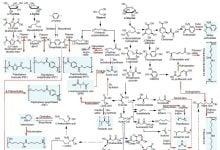Photo of نقشه متابولیکی جامع برای تولید مواد شیمیایی زیستپایه