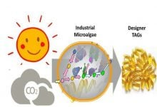 Photo of تولید تریآسیل گلیسرول توسط میکروجلبکهای صنعتی