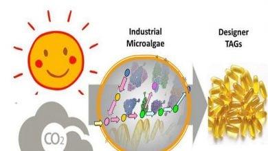 تولید تریآسیل گلیسرول با میکروجلبک