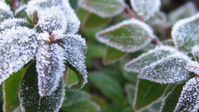 شناسایی نحوه پاسخ گیاهان به سرما