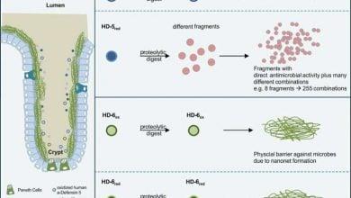 Photo of فعالکردن سیستم ایمنی در برابر باکتریها