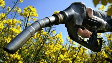 Biodiesel production - biotechnology news