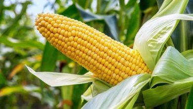افزایش تحمل خشکی گیاه