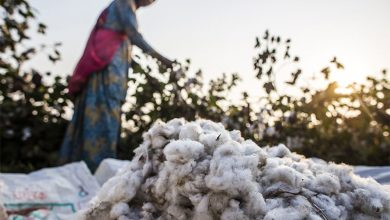 GM cotton patent - biotechnology news