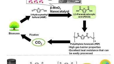 Photo of Green catalysts with Earth-abundant metals accelerate production of bio-based plastic