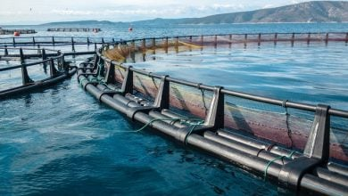 Photo of Risk management for the aquaculture industry