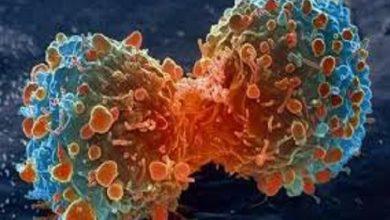 تجمع باکتریایی بر میکروپلاستیکها