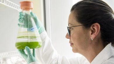 Photo of تولید اقتصادی سوخت زیستی از جلبک