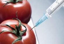 Photo of بررسی کتاب نانوبیوتکنولوژی در صنایع غذایی