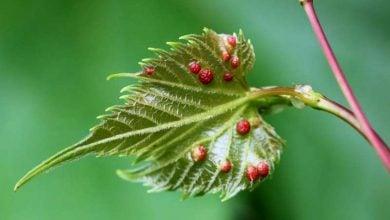 Photo of ژن های باروری گیاه در خدمت حشرات