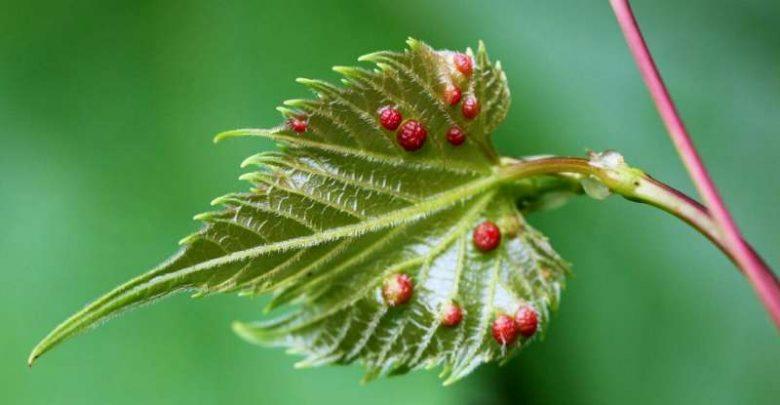 ژن های باروری گیاه در خدمت حشرات