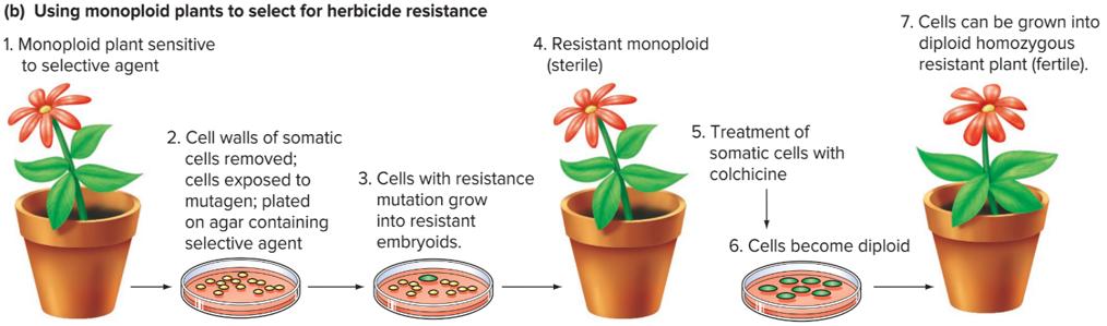 استفاده از گیاهان مونوپلوئید