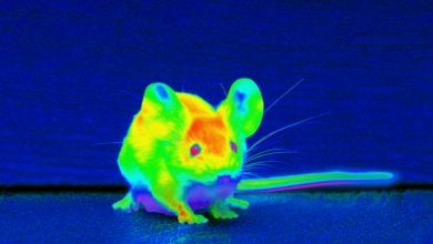 Photo of قابلیت دیدن امواج فروسرخ با استفاده از نانوذرات تزریقی