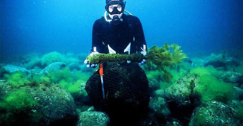 عصارهی ضد سرطان در جلبک دریایی