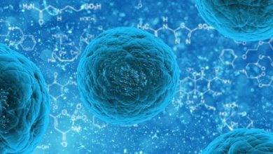 سلولهای بنیادی لوسمی