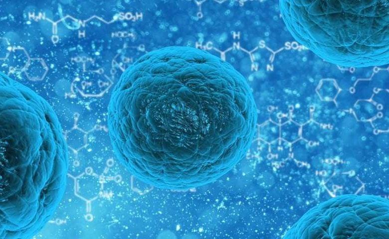 مخفی شدن سلولهای بنیادی از دید سیستم ایمنی