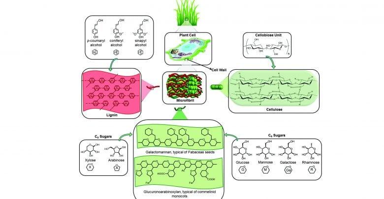 بهبود محتوای لیگنین گیاهان علفی
