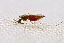 مبارزه با مالاریا توسط پشهبند