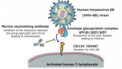 Photo of مبارزه با ویروس هرپس 6B به کمک آنتیبادیهای انسانیسازی شده