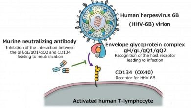 ویروس هرپس B6